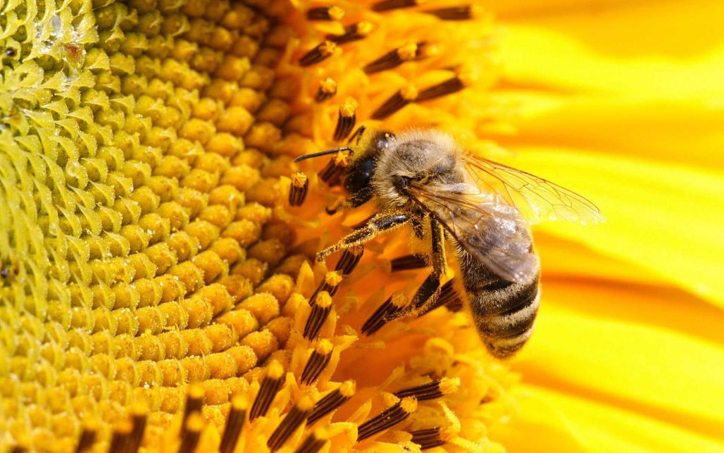 Petition to ban pesticides that kill bees