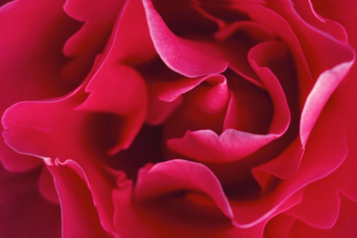 Rose in Perfumery and its Reinvention