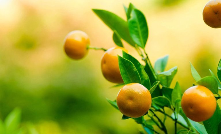 PAIRFUM citrus mandarin on tree natural room fragrance perfume