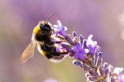 The EU has voted for a permanent ban on pesticides that are harmful to bees