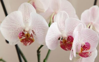 houseplants-clean-air-home-orchid