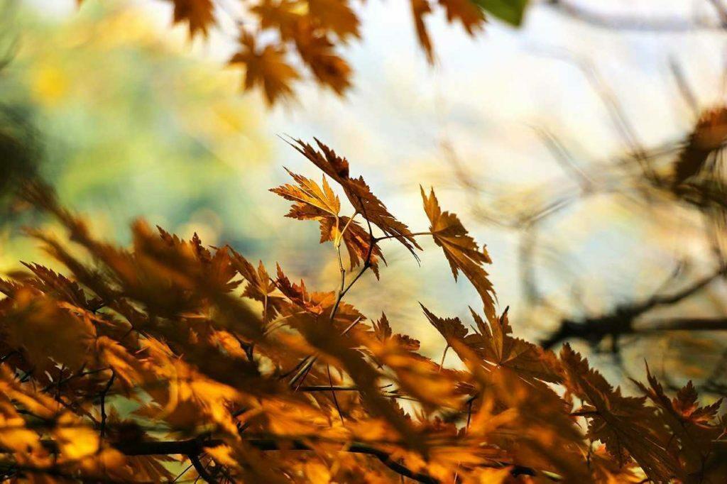 Autumn Leaves Light Wood Leaf Fragrance Memories