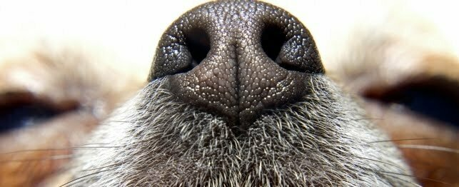 Dogs Sniff Inappropriate Places Nose