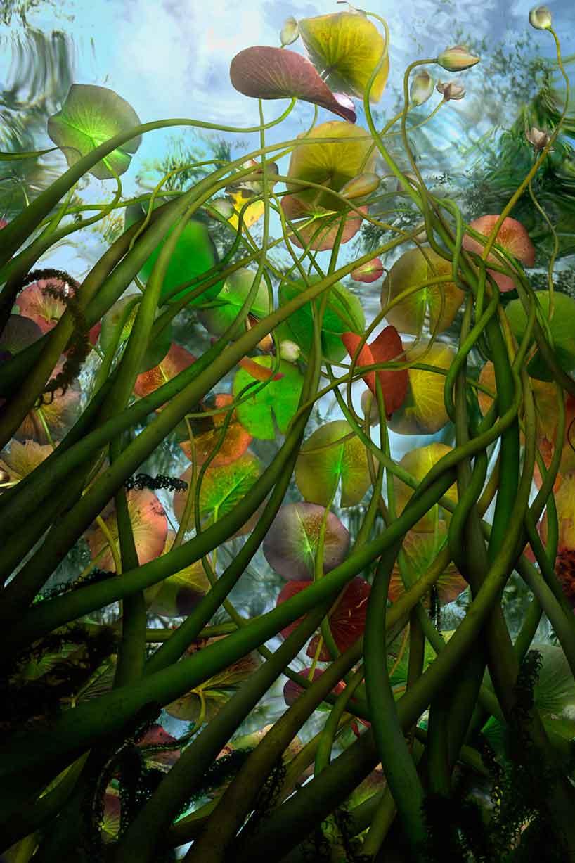 catherine-nelson-submerged-flora-flood