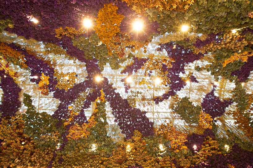 rebecca-louise-law-floral-canopy-light