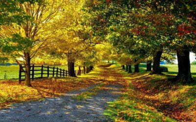 path avenue autumn leaves trees yellow green protection brightly