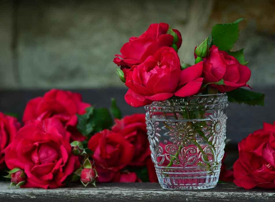 red-roses-vase