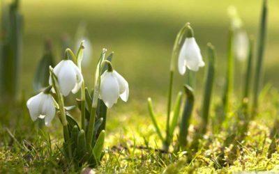 Fragrance of Snowdrops Light Green Fresh Sun Spring