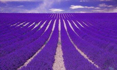 Lavender Field Outdoor Perfume