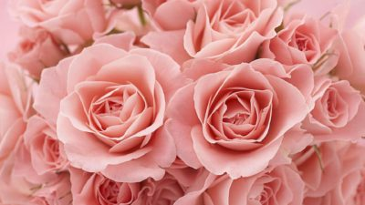 Rose Perfume Pink Petal Bud Bouquet