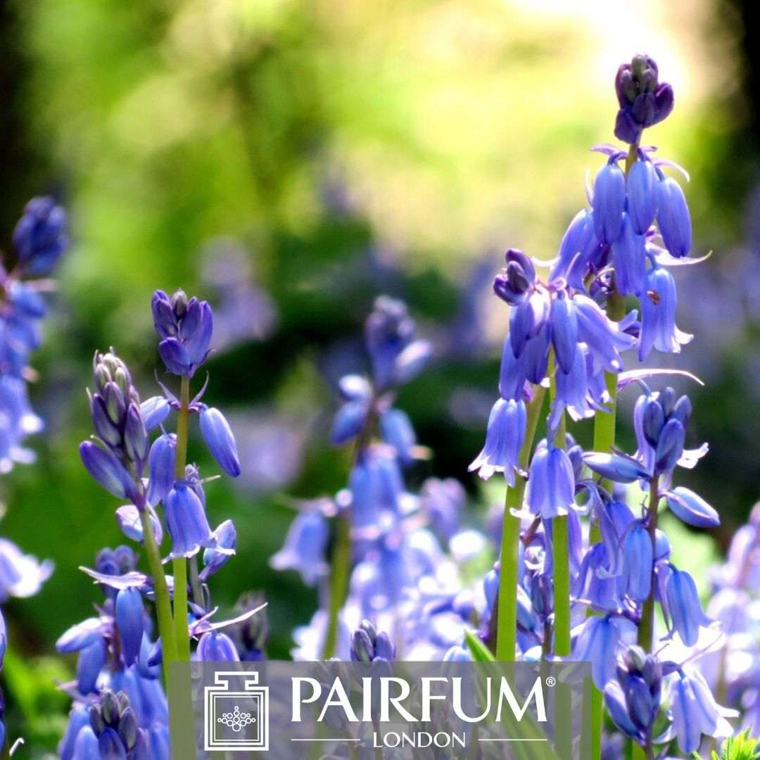 Bluebell Wood Perfume Pairfum London Dappled Light