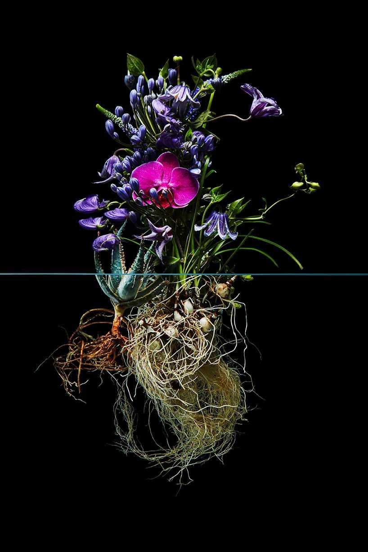 Pairfum London Azuma Makoto Undersurface Flower Root Fragrance 02