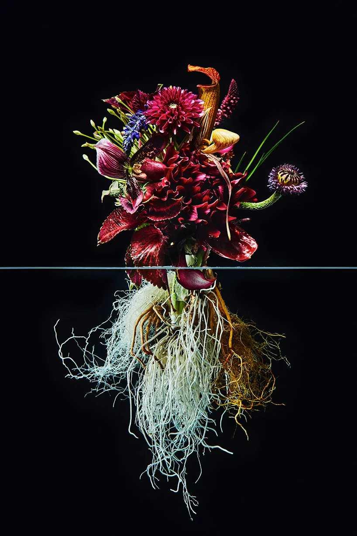 Pairfum London Azuma Makoto Undersurface Flower Root Fragrance 03
