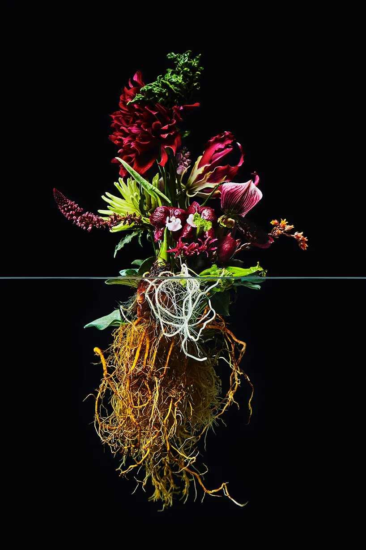 Pairfum London Azuma Makoto Undersurface Flower Root Fragrance 07