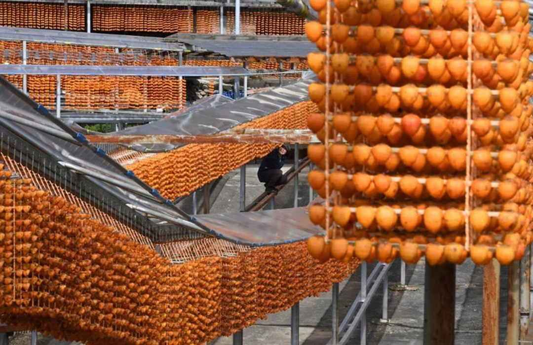 Persimmon Drying Season Japan Christo New York Fragrance 7