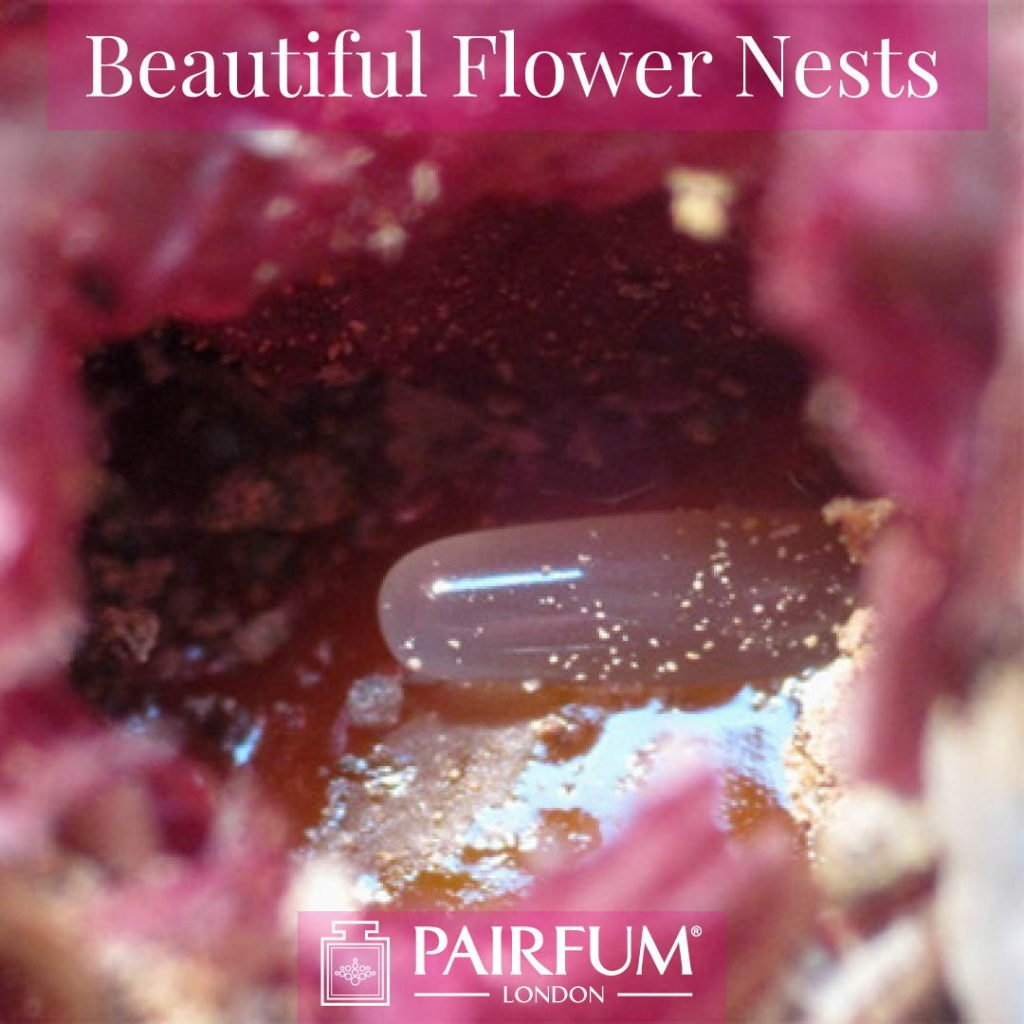 Beautiful Flower Nests Petal Special Bee Larvae Pairfum 12