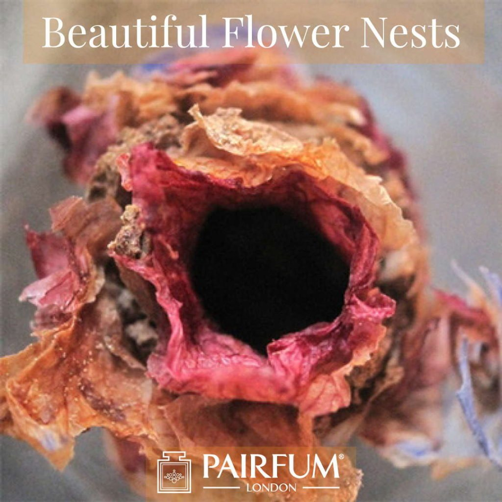 Beautiful Flower Nests Petal Special Bee Larvae Pairfum 13