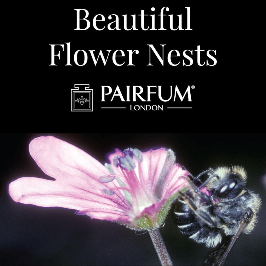 Beautiful Flower Nests Petal Special Bee Larvae Pairfum 14