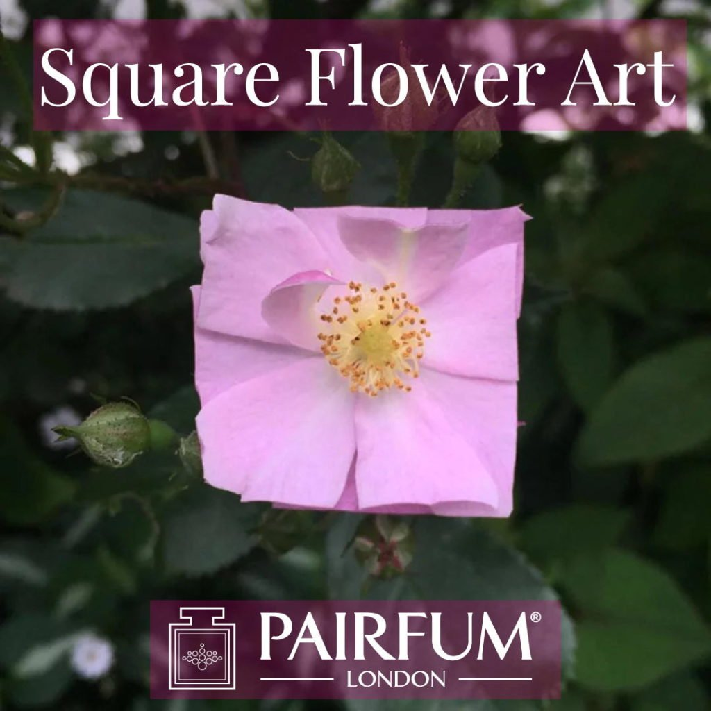 Square Flower Art Pale Pink Organic Form