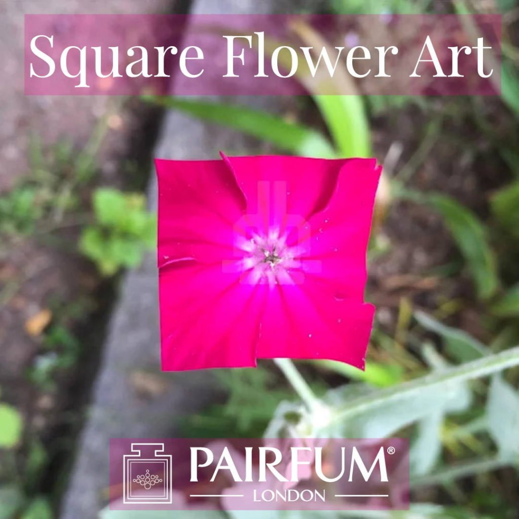 Square Flower Art Pink Organic Form
