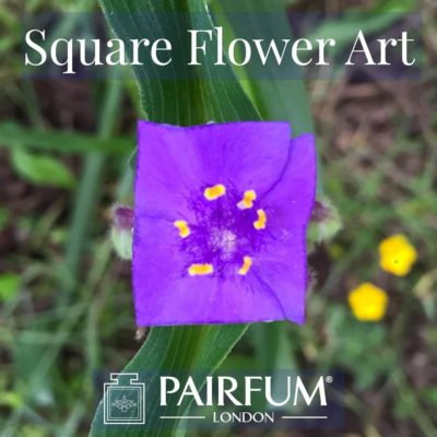Square Flower Art Purple Natural Form