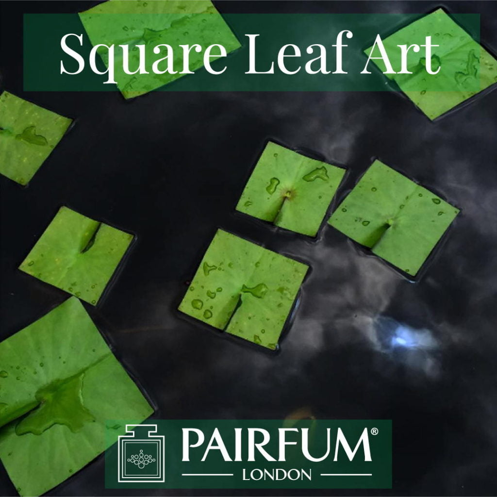 Square Leaf Art Green Water Lily Organic Form