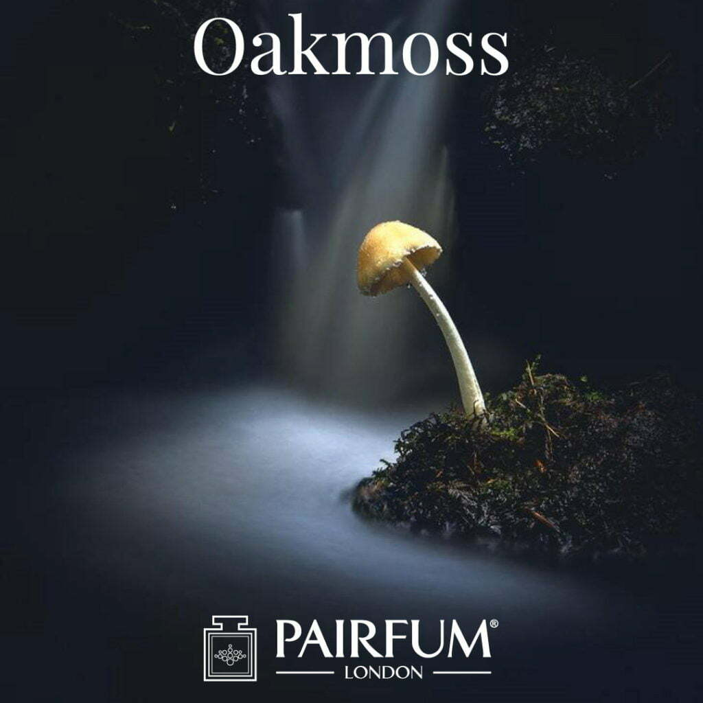 Outdoor Photgrapher Year Small World Oakmoss Fragrance Jay Birmingham