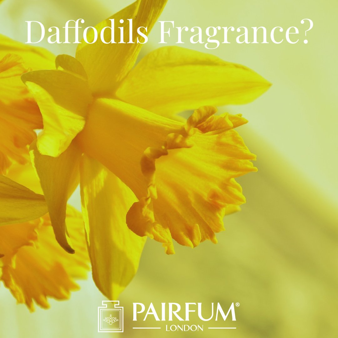 Do Daffodils Have A Fragrance Windsor Park