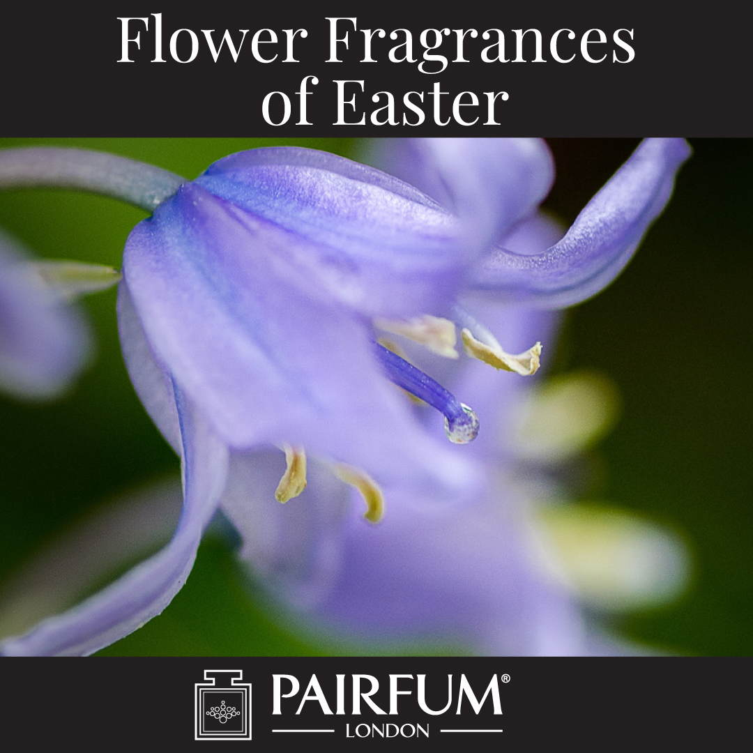Flower Fragrances Of Easter Bluebell