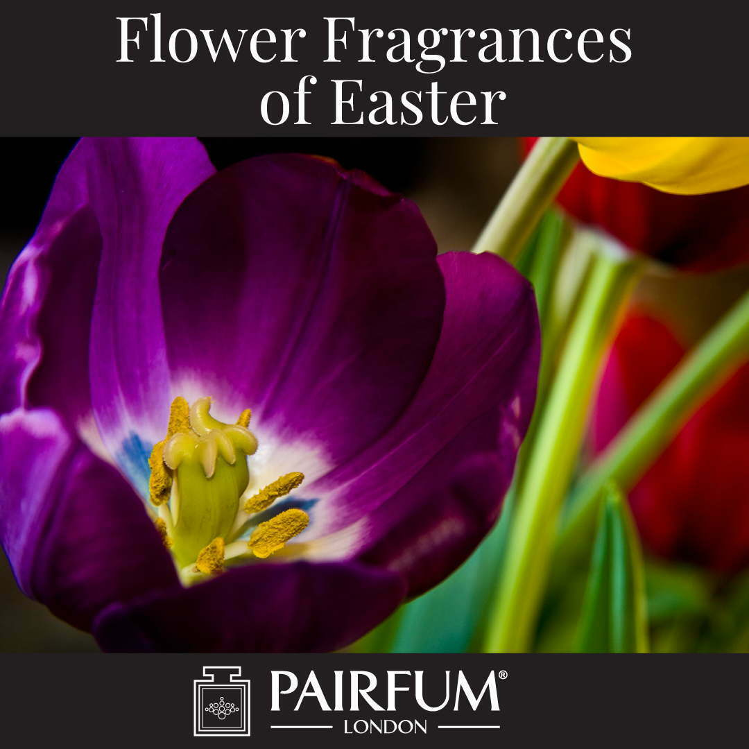 Flower Fragrances Of Easter Tulip