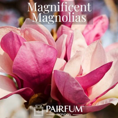Fragrance Magnificent Magnolias Windsor Park