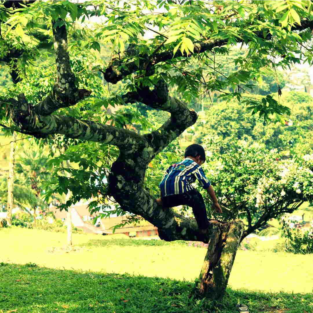 Kates Garden Child Climbing A Tree