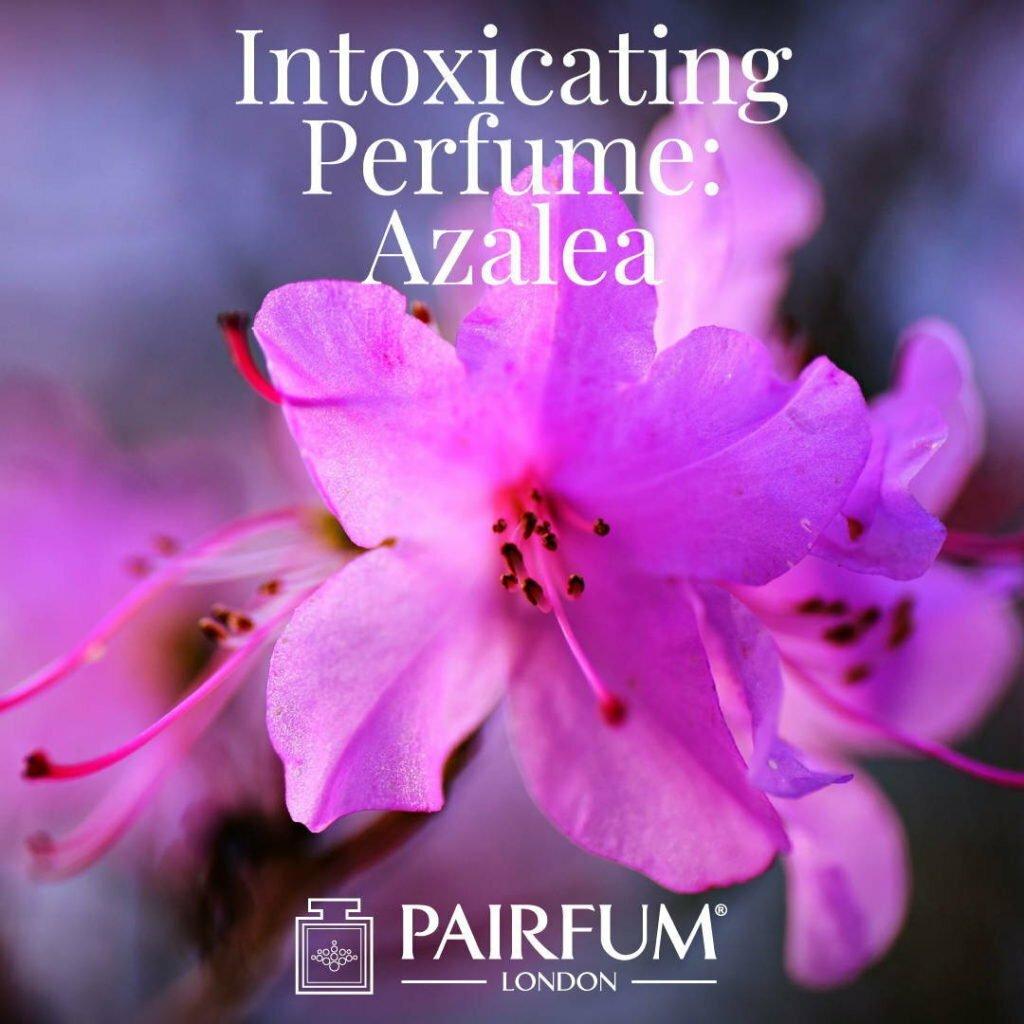 Windsor Park Azalea Intoxicating Perfume under the influence