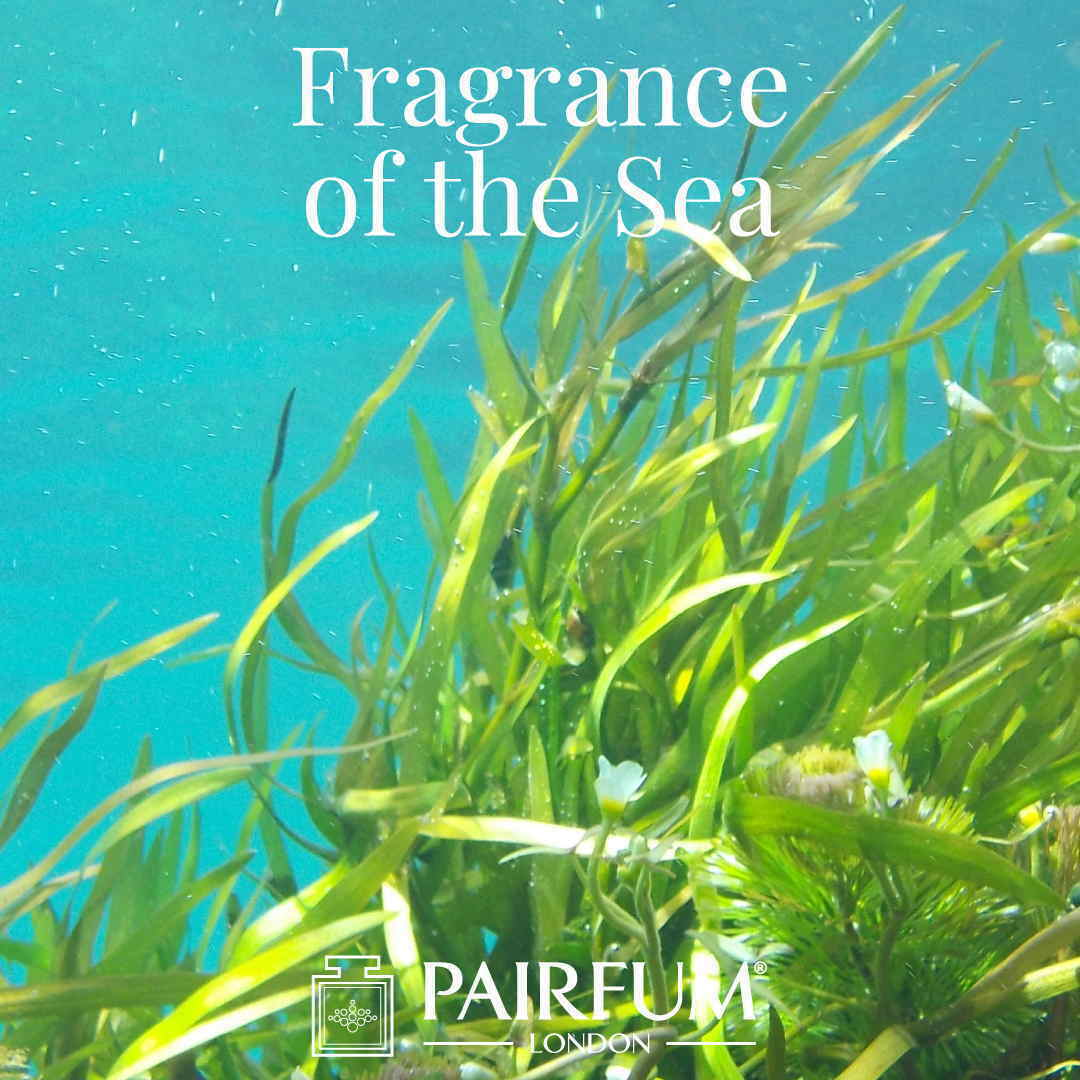 Sea Perfume Sex On The Beach Seaweed Algae