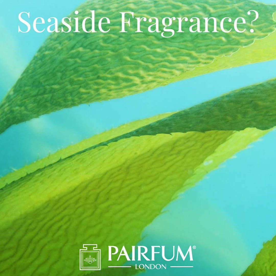 Sea Side Fragrance Sex On The Beach Kelp Algae