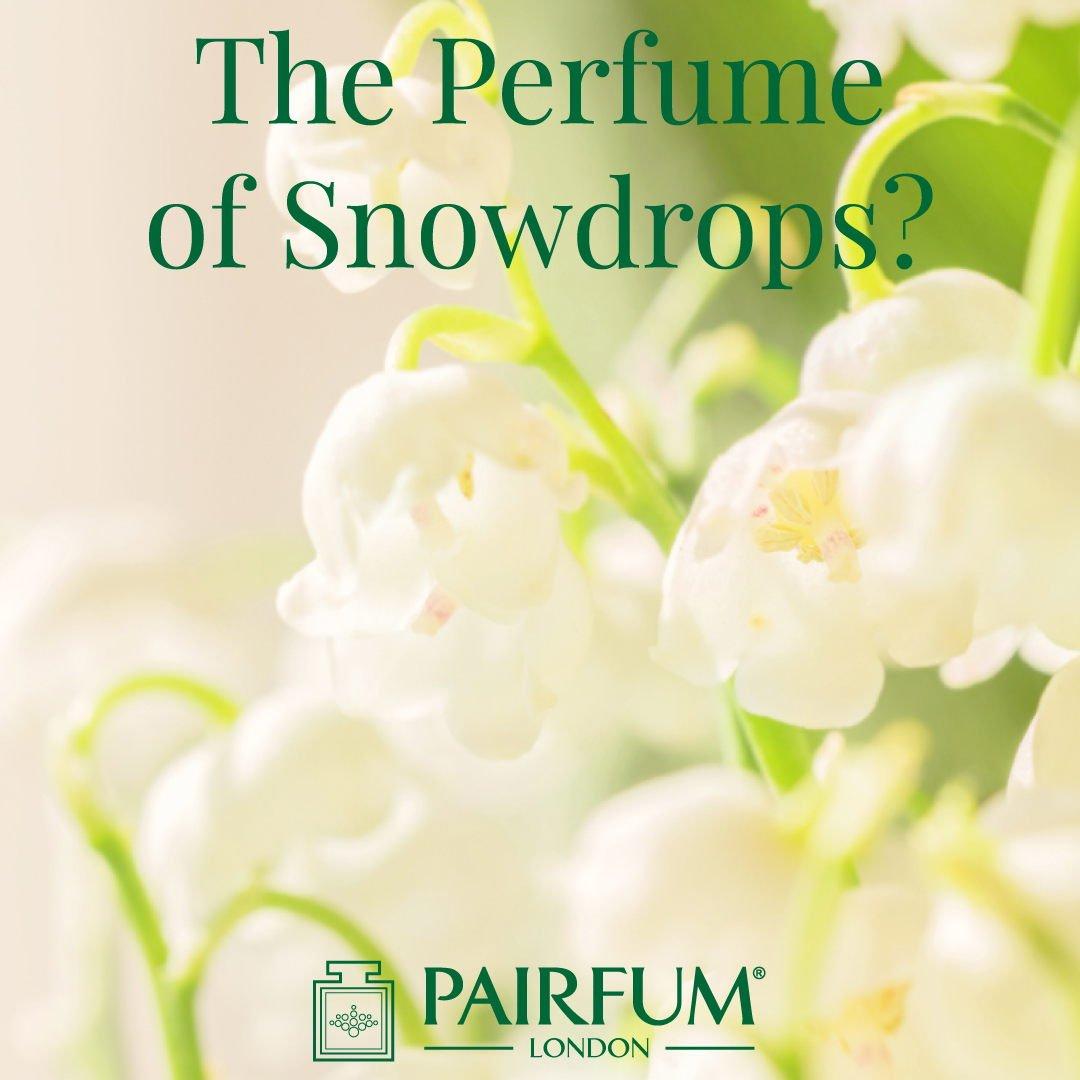 Snowdrops Sunlight Perfume Windsor Park