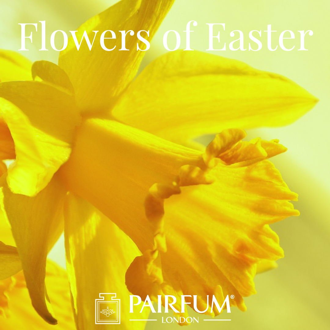 Pairfum London Flower Fragrances Of Easter Daffodil Narcissus