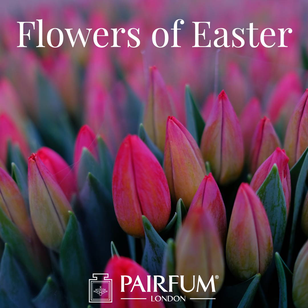 Pairfum London Fragrant Flowers Of Easter Tulip