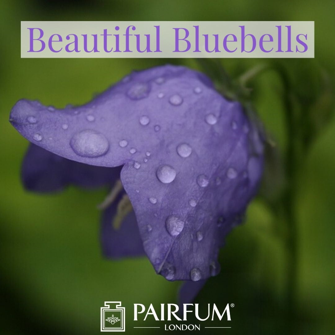 Bluebell Wood Perfume Pairfum London Home Fragrance