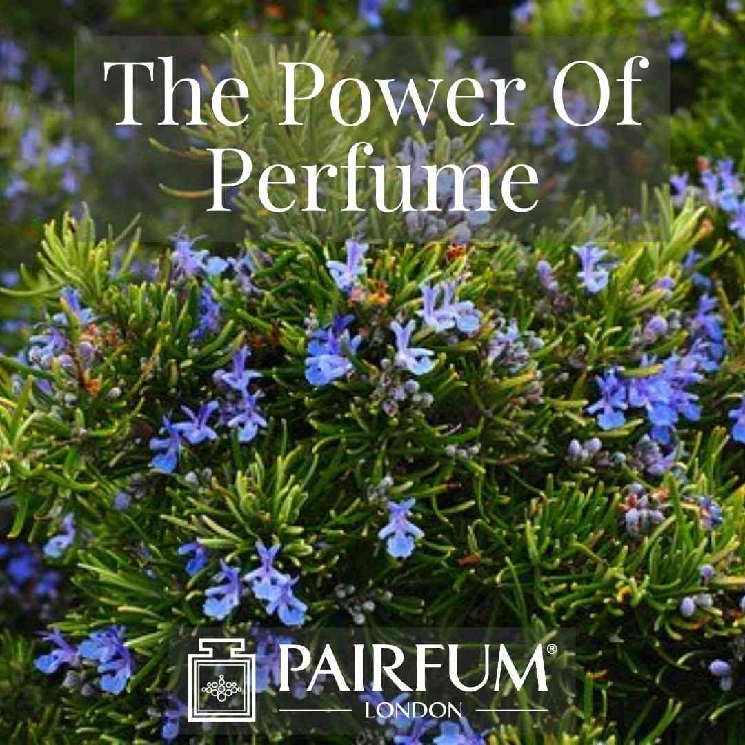 PERFUME TREND BLUE FLOWER SHRUB
