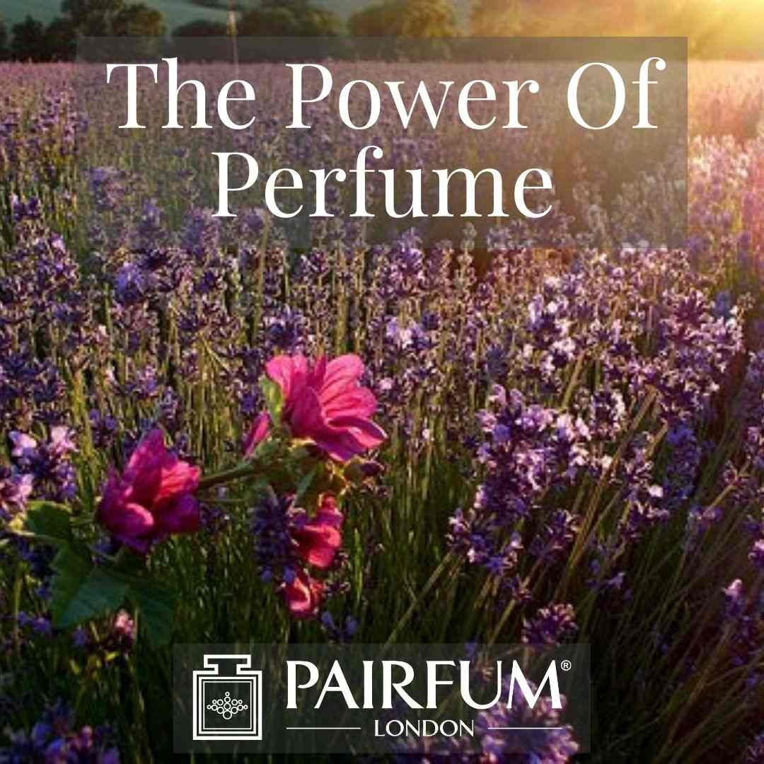 PERFUME TREND FLOWERS IN A MEADOW