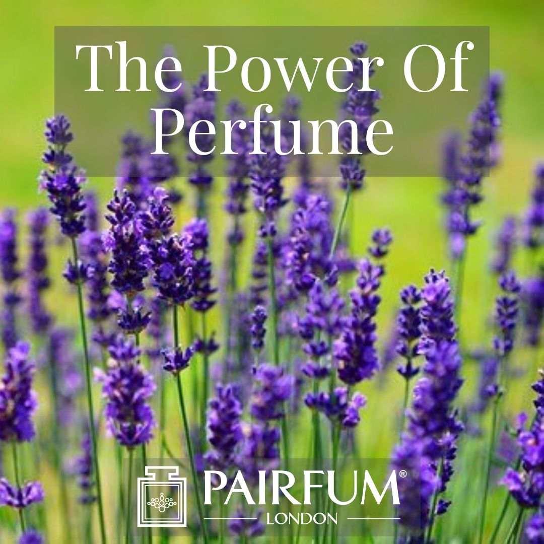 PERFUME TREND MAGNOLIA FLOWERS