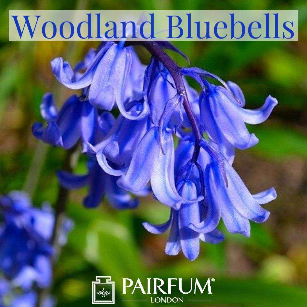 Bluebell Wood Perfume Pairfum London Flower