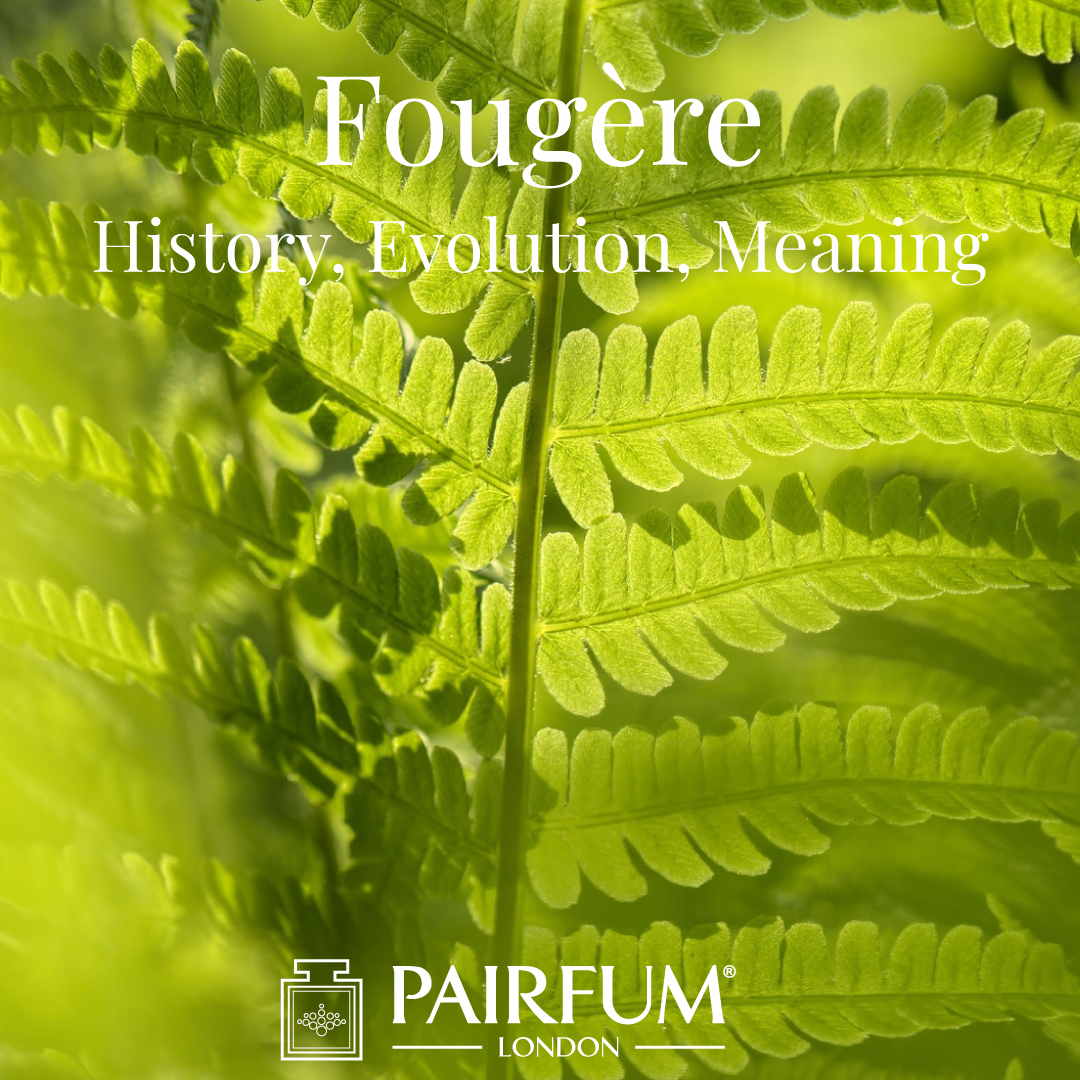 Fern Fougere Fragrance Evolution Meaning History