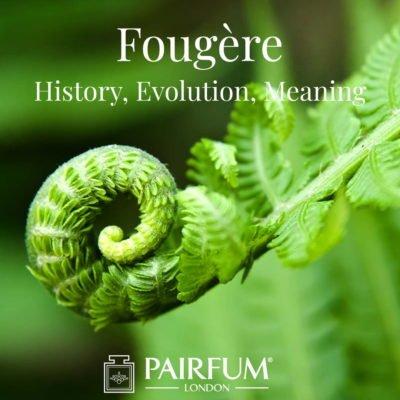 Fern Fougere Fragrance History Evolution Meaning