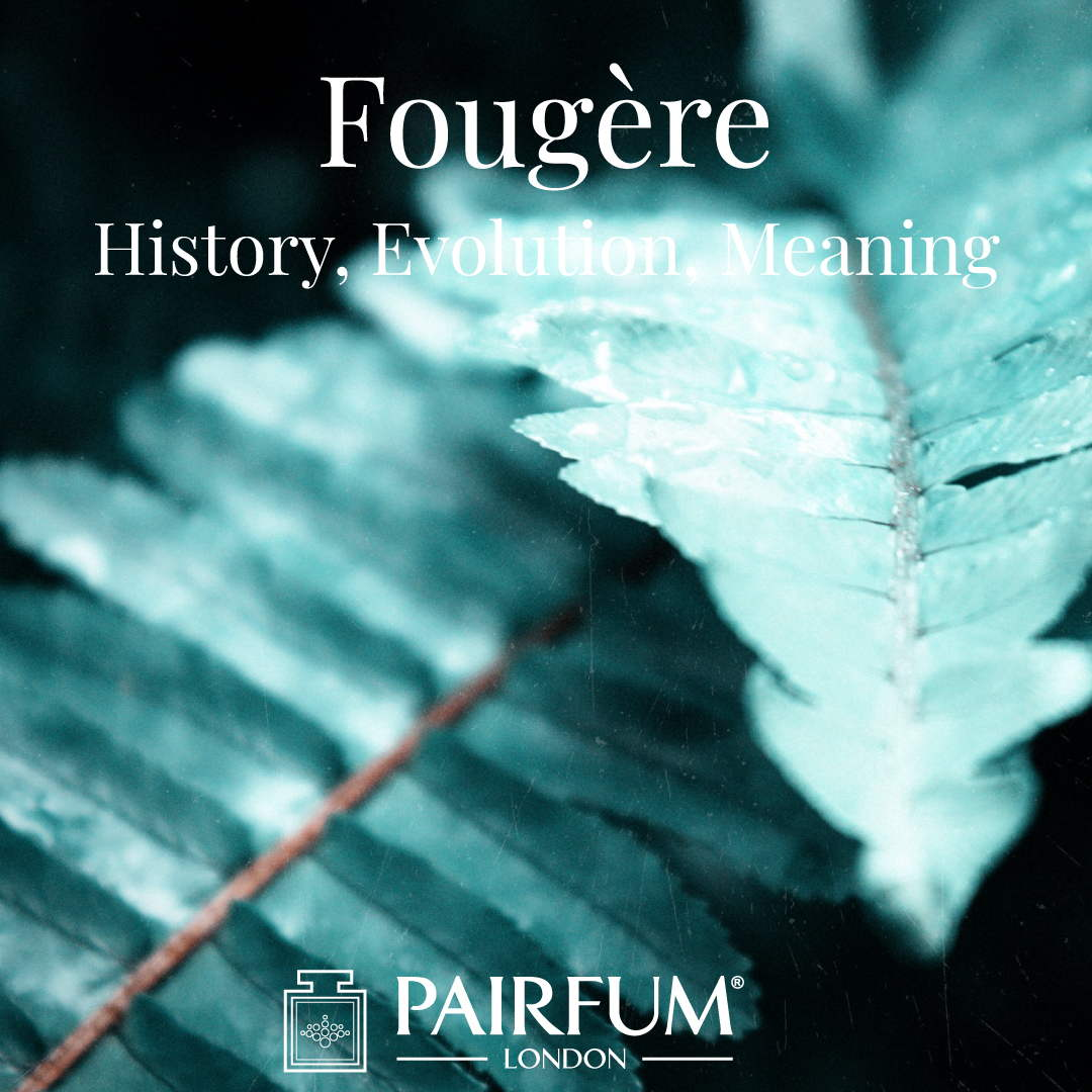 Fern Fougere Fragrance Meaning History Evolution