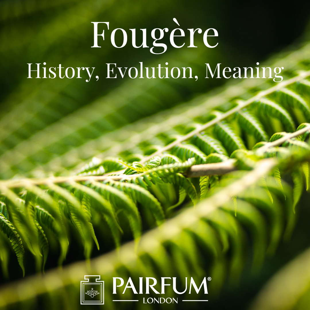 Fougere Fragrance Evolution Meaning History Fern