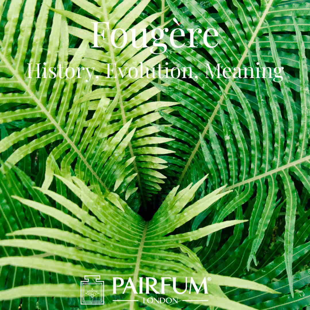 Fougere Perfume Evolution Meaning History Fern