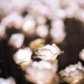 Pairfum Floriental Perfume Description Home Fragrance Rose Vanilla