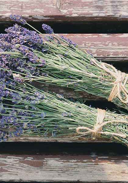 Beautiful Lavender Bundel Scent